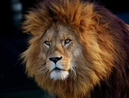 Unleash the Lion in You With These Simple Tips